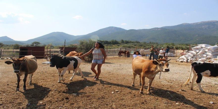 'Sibel'in Çiftliği'
