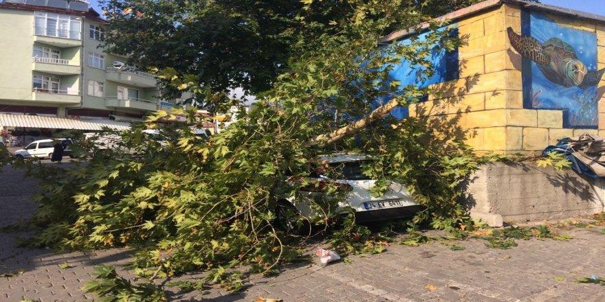 Ağacın kırılan dalları otomobilin üzerine düştü