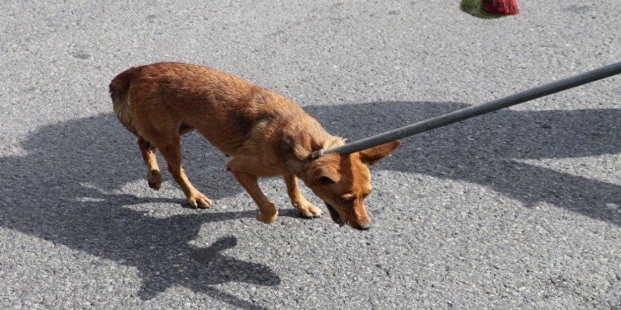 'Yabani köpek' operasyonu