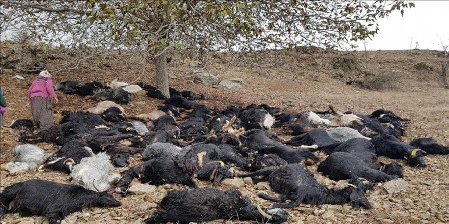 Yıldırım isabet eden 81 keçi telef oldu