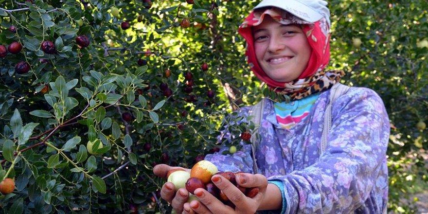 'Ölümsüzlük meyvesi' misket elmasına rakip oldu