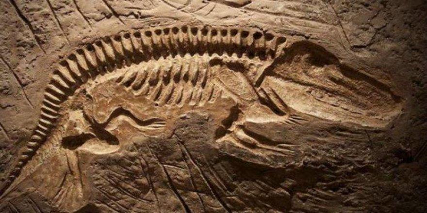 Moğolistan'da 120 milyon yıllık dinozor fosili bulundu