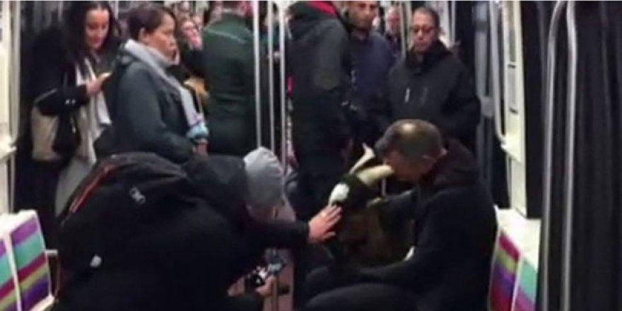 Metroda çaldığı keçi ile yakalandı