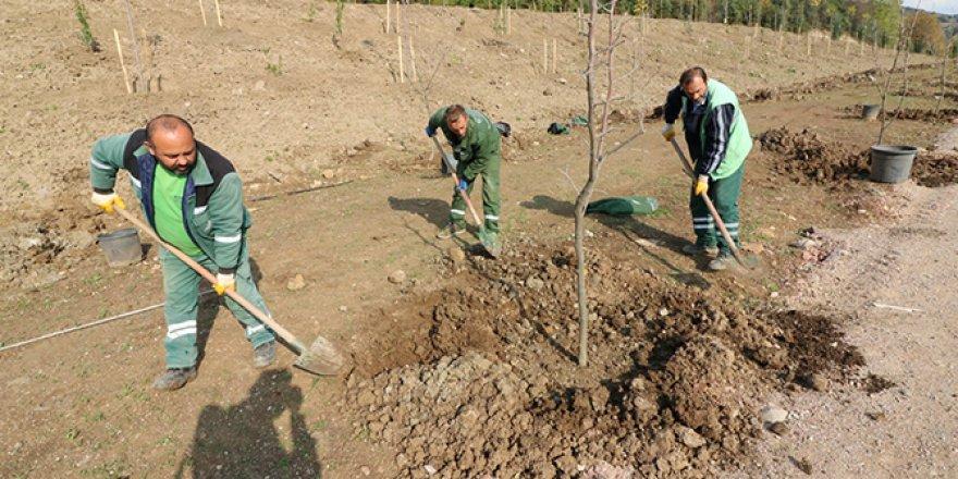 22 Farklı türde 9 bin ağaç dikildi