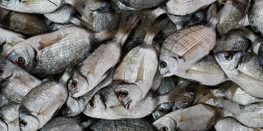 Türkiye'den 64 ülkeye balık ihracatı