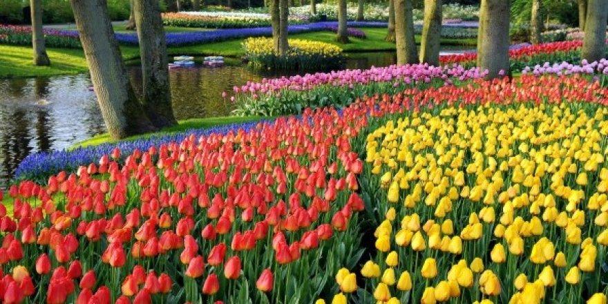İstanbul'un Simgesi Haline Gelmiş Güzel Çiçekler