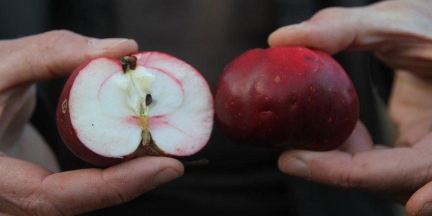 'İçi ve dışı kırmızı elma' tescillendi