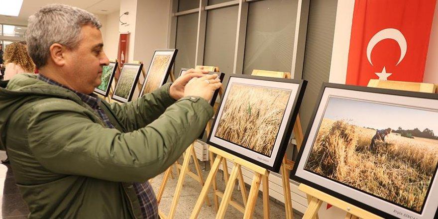 Buğdaydan ekmeğe, bir sezon emeği fotoğrafladılar