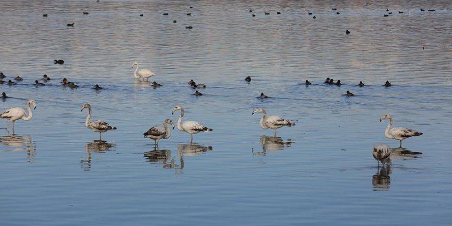 İzmit Körfezi 'kuş cenneti' haline geldi