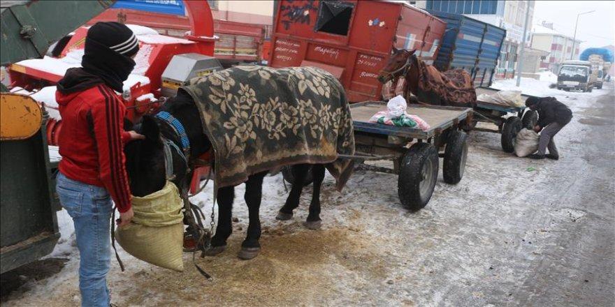Atlarını soğuktan battaniye ile koruyorlar