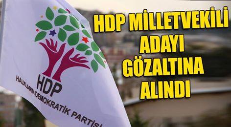 HDP MİLLETVEKİLİ ADAYI GÖZALTINA ALINDI!