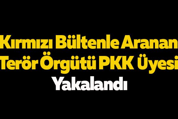Kırmızı Bültenle Aranan Terör Örgütü PKK Üyesi Yakalandı