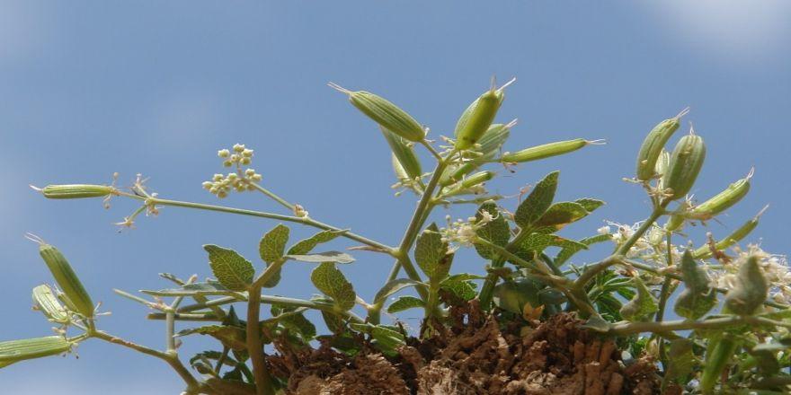 Yeni Bir Bitki Türü Keşfedildi