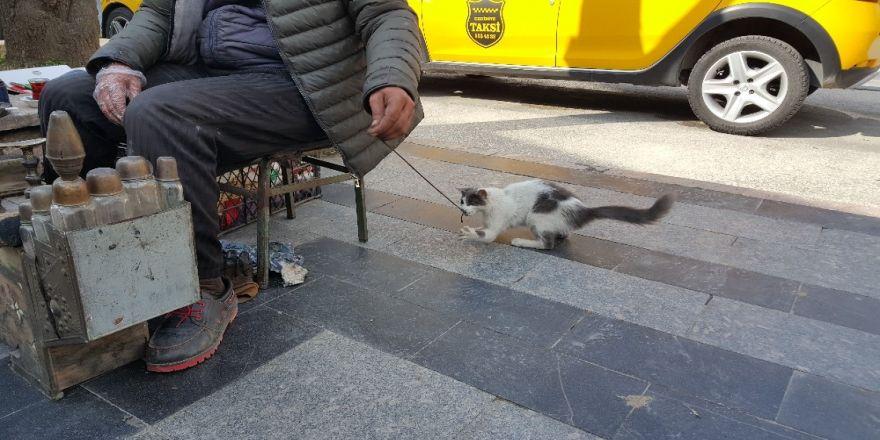 Boyacıyla Sokak Kedisinin Dostluğu Görenleri İmrendiriyor