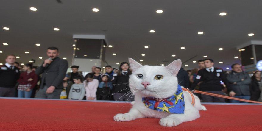 Van Kedisi Güzellik Yarışması