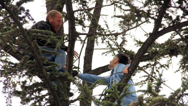 İşsiz Kalan Şahıs Ağaca Çıktı