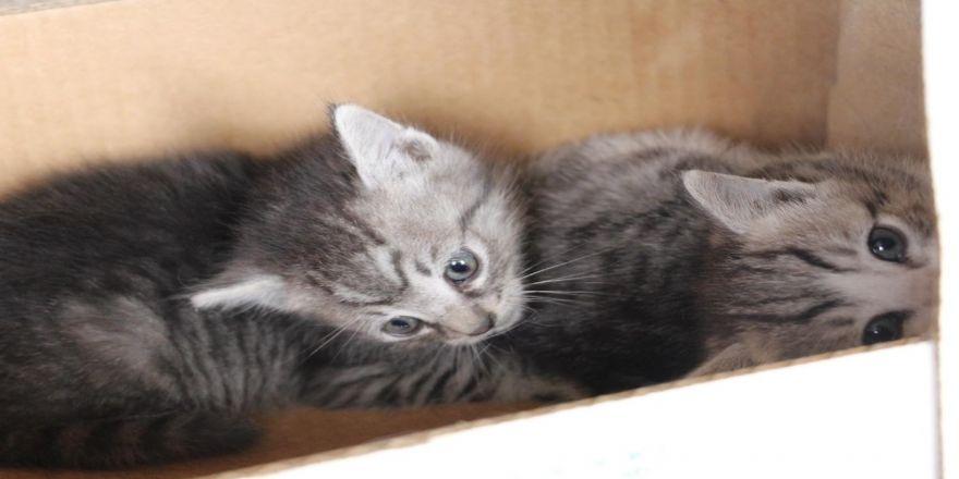 Çatı Aralığında Doğan Kedi Yavrularını İtfaiye Kurtardı