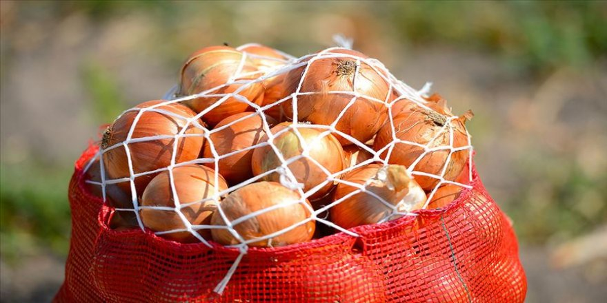 Nisan sonunda soğan fiyatının 1-1,5 lira olması bekleniyor'