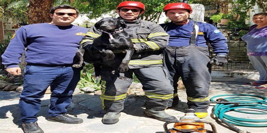 Bahçe kapısına sıkışan Zeytin'i itfaiyeciler kurtardı