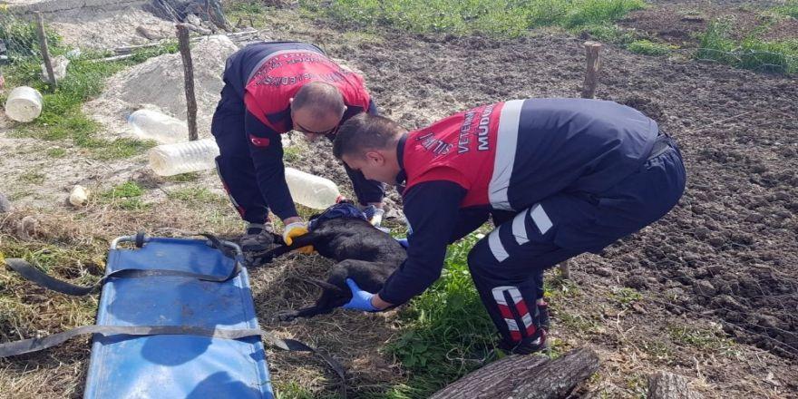 Yaralı Halde Kapısına Gelen Köpeği Kurtarmak İçin 45 Dakika Mücadele Etti
