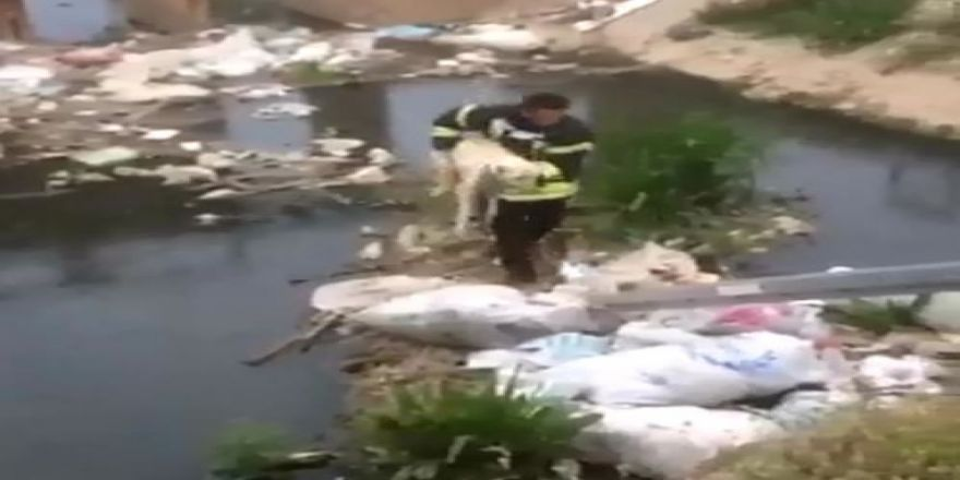 Kanalda Mahsur Kalan Köpeğe İtfaiye Kurtardı