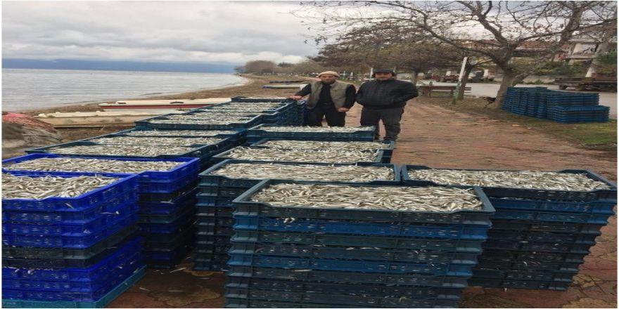 İznik'te Gümüş Balığı Bereketi