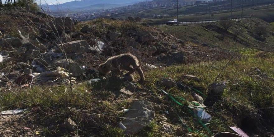 Kafası Kavanoza Sıkışan Yavru Köpeği Mehmetçik Kurtardı