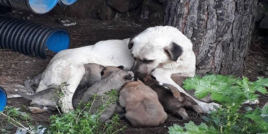 Erdek'te Kedi Ve Köpekler Zehirlendi
