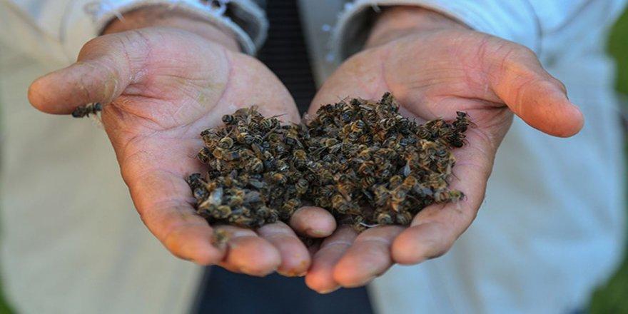 Toplu arı ölümlerinin sebebi açıklandı