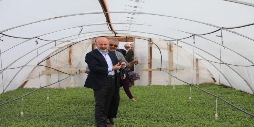 Başkan Çolakbayrakdar'dan Organik Domates Fidesi Dağıtım Etkinliğine Davet