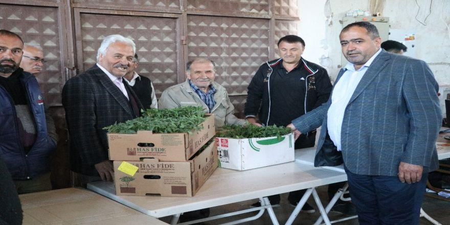Ziraat Odası çiftçilere 500 bin fide dağıttı