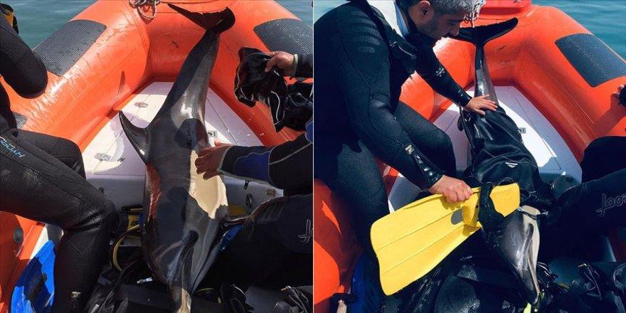 Sığ suda sıkışan yunus botla kurtarıldı