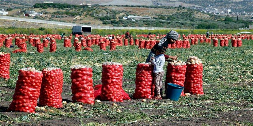 Soğan işçilerinin ramazanda zorlu mesaisi