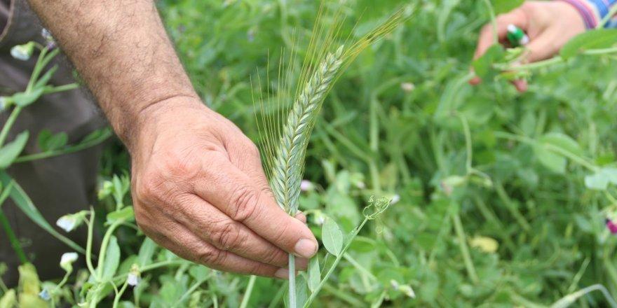 Çiftçinin ayağına tarım danışmanı