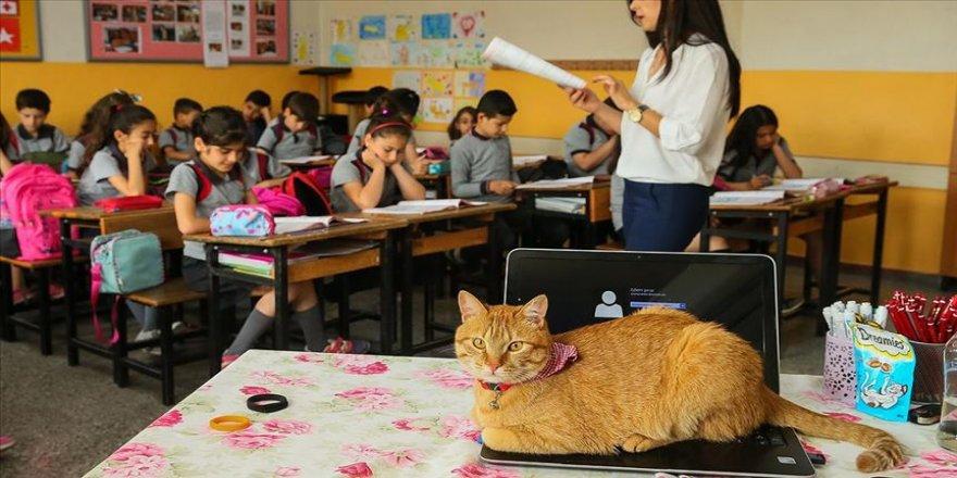 Kedi Tombi'ye hüzünlü veda