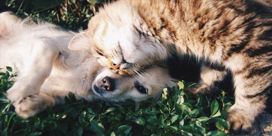 'Sokak hayvanları için tek çözüm popülasyon kontrolü'