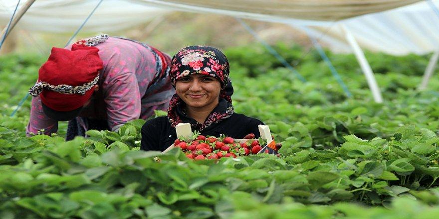 Kadınların 'kırmızı mesaisi' ihracat için