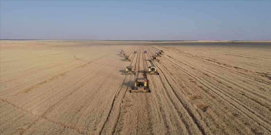 'Dev işletme'nin kaliteli buğdayına yurt dışı ilgisi