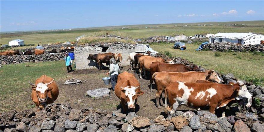 Köylülerin 'yayla mesaisi' devam ediyor