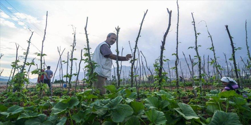 Bahçeye dönüştürülen atıl arazi geçim kaynakları olacak