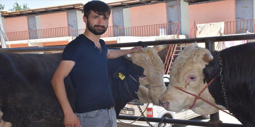 'İkiz kardeşler' kurban pazarının gözdesi oldu