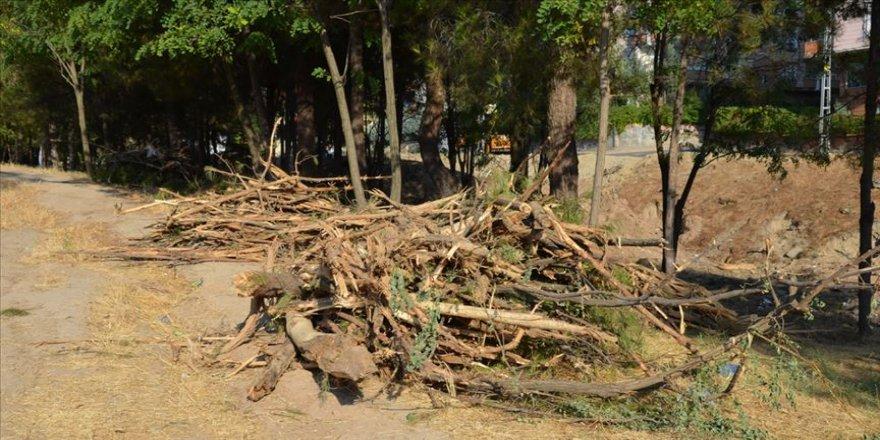HDP'li belediyenin ağaç kesimine tepki