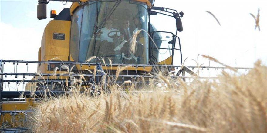 Vali Memiş biçerdöverle buğday hasadı yaptı