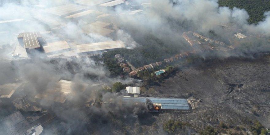 Gebze'deki orman yangınındaki acı bilanço