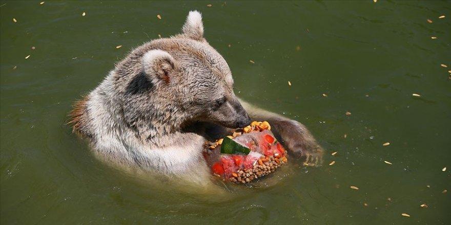 Hayvanlar 'buzlu menüler'le serinliyor