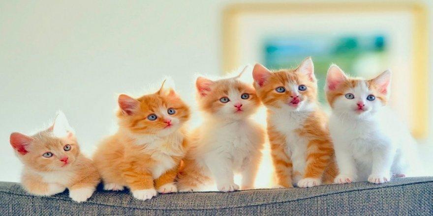 Yavru Kedileriniz İçin Harika İsimler