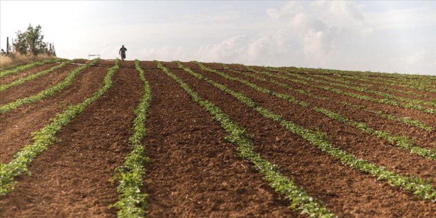 Filistin hükümetinden İsrail'e bağımlılığı sonlandıracak tarımsal kalkınma projesi