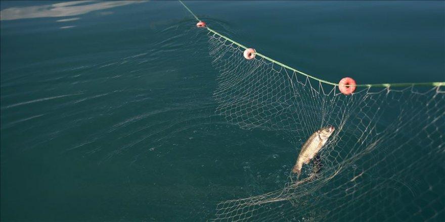 Temizlenen ağlarla 1,5 milyon balık hayata tutundu