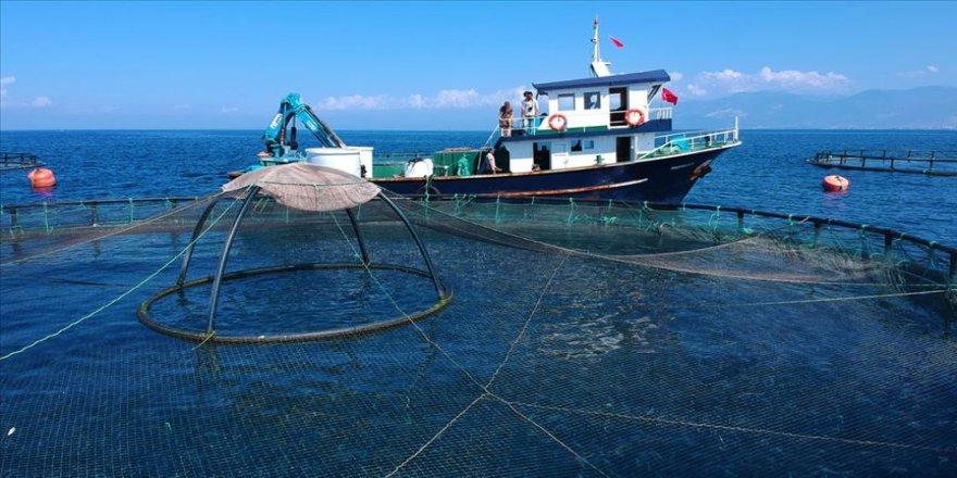 Çin'e su ürünleri ihracatı başlıyor