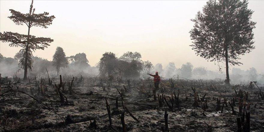 330 bin hektar orman kül oldu